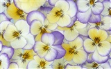 Widescreen wallpaper flowers close-up (33) #18