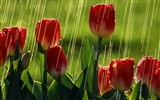 Widescreen wallpaper flowers close-up (33) #20