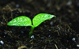 Green seedlings just sprouting HD wallpapers #17