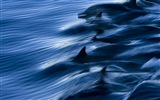 Windows 8 tema wallpaper: delfines elegantes #3
