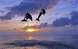 Windows 8 tema wallpaper: delfines elegantes #4