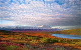 Denali National Park Landscape Wallpapers HD