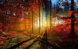 Autumn red leaves forest trees HD wallpaper