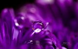 Flowers with dew close-up, Windows 8 HD wallpaper