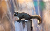 Animal close-up, cute squirrel HD wallpapers