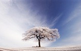 Winter snow beautiful scenery HD wallpapers #4
