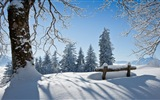 Winter snow beautiful scenery HD wallpapers #13