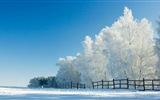 Winter snow beautiful scenery HD wallpapers #15