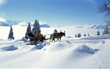 Winter snow beautiful scenery HD wallpapers #17