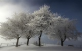 Winter snow beautiful scenery HD wallpapers #18