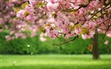 Spring flowers bloom HD Wallpapers