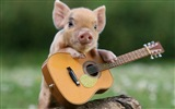 Pig Year about pigs HD wallpapers #7